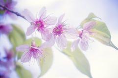 Flor cor-de-rosa 3 fotos de stock royalty free