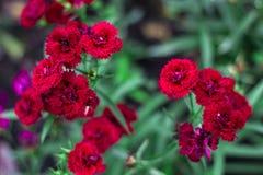 Flor cor-de-rosa fotografia de stock