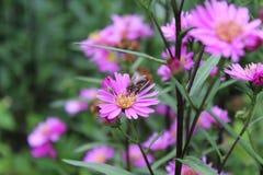 Flor cor-de-rosa agradável Foto de Stock Royalty Free