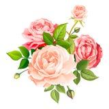 Flor cor-de-rosa bonita ilustração do vetor