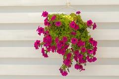 Flor cor-de-rosa bonita como a decoração em uma loja do café imagens de stock royalty free
