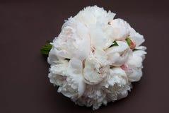 Flor cor-de-rosa bonita do lírio isolada no fundo branco Fim acima Fotografia de Stock Royalty Free