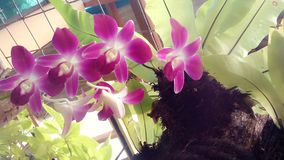 Flor cor-de-rosa bonita e fresca Fotografia de Stock Royalty Free