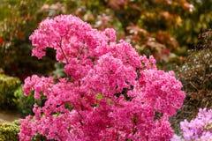 Flor cor-de-rosa bonita no meio de um jardim botânico Foto de Stock