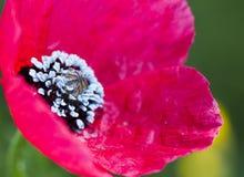Flor cor-de-rosa brilhante Fotos de Stock Royalty Free