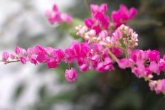 Flor cor-de-rosa brilhante da flor sobre o fundo borrado natureza fotos de stock royalty free