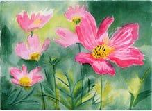 Flor cor-de-rosa da aguarela no jardim Ilustração Stock