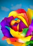Flor cor-de-rosa da falsificação Fotos de Stock Royalty Free
