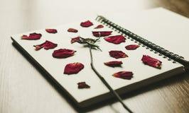 Flor cor-de-rosa da imprensa com as pétalas no livro, foco seletivo, tom do vintage Fotografia de Stock Royalty Free
