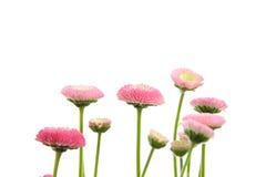 Flor cor-de-rosa da mola imagem de stock