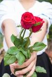 flor cor-de-rosa da posse da mão fotos de stock royalty free