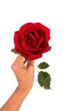 Flor cor-de-rosa da posse da menina da mão fotografia de stock royalty free