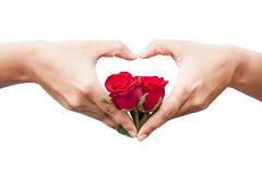 Flor cor-de-rosa da posse do coração da mão fotos de stock