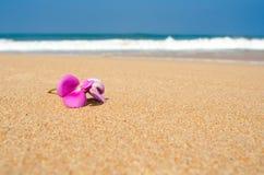 Flor cor-de-rosa de Leelawadee na areia Imagem de Stock