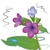 Flor cor-de-rosa do cravo com gotas de água no fundo branco ilustração stock