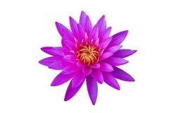 Flor cor-de-rosa do lírio de água ou flor de lótus isolada no fundo branco Fotografia de Stock