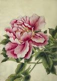 Flor cor-de-rosa do peony ilustração do vetor
