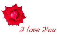 Flor cor-de-rosa do vermelho imagem de stock royalty free
