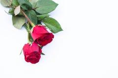 Flor cor-de-rosa do vermelho imagens de stock royalty free