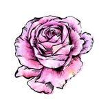 Flor cor-de-rosa do vetor do Wildflower em um estilo da aquarela isolada ilustração stock