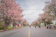 Flor cor-de-rosa doce da flor na estação de mola Foto de Stock