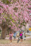 Flor cor-de-rosa doce da flor na estação de mola Imagem de Stock Royalty Free