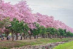 Flor cor-de-rosa doce da flor na estação de mola Fotos de Stock Royalty Free