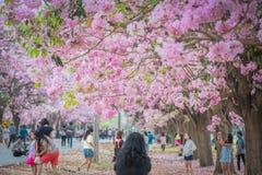 Flor cor-de-rosa doce da flor na estação de mola Imagens de Stock Royalty Free