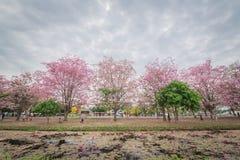 Flor cor-de-rosa doce da flor na estação de mola Foto de Stock Royalty Free