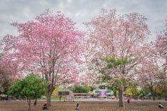 Flor cor-de-rosa doce da flor na estação de mola Imagem de Stock