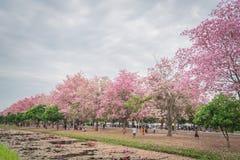 Flor cor-de-rosa doce da flor na estação de mola Fotografia de Stock Royalty Free