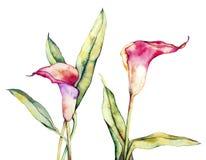 Flor cor-de-rosa e azul ilustração royalty free