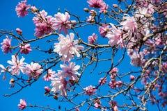 Flor cor-de-rosa e céu azul fotografia de stock