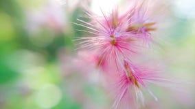 Flor cor-de-rosa e gota Fotografia de Stock