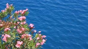 A flor cor-de-rosa e vê vídeos de arquivo