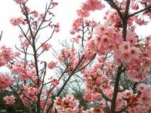Flor cor-de-rosa @ fresca fotografia de stock royalty free