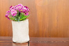 flor cor-de-rosa na mesa de madeira Fotografia de Stock Royalty Free
