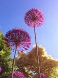 Flor cor-de-rosa no dia ensolarado foto de stock royalty free