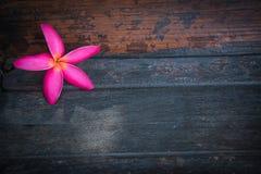 Flor cor-de-rosa no fundo de madeira Fotografia de Stock