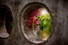 Flor cor-de-rosa no furo imagens de stock