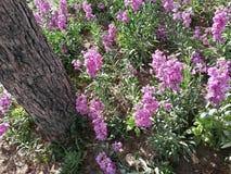 Flor cor-de-rosa no grande Imagem de Stock