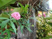 A flor cor-de-rosa fotos de stock royalty free