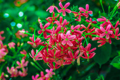 Flor cor-de-rosa pequena Imagens de Stock Royalty Free