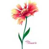 Flor cor-de-rosa realística do vetor ilustração royalty free