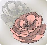 Flor cor-de-rosa selvagem, mão-desenho. Illustratio do vetor Fotografia de Stock Royalty Free