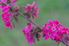 Flor cor-de-rosa sobre um contexto verde do contexto do contexto foto de stock