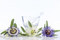 Flor coulored três da paixão com almofariz fotos de stock