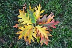 Flor creada de las hojas secadas en la hierba verde Fotos de archivo libres de regalías