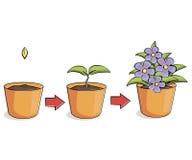 Flor creciente libre illustration