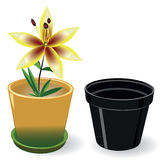 Flor creciente en un pote y pote vacío negro Imagen de archivo libre de regalías